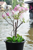 Bougainvillea flowers in plant-pot on waterside — Стоковое фото
