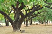Many big trees in public garden — Stockfoto