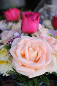 Beautiful big pink and red roses. — Stock Photo