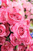 Many pink roses showing in pot, artificially — Stock Photo