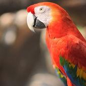 Close up beautiful macaw in zoo — Stock Photo