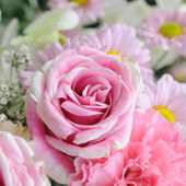 Pink and white roses. — Stock Photo