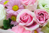 Pink-roses — Stock Photo