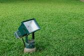 Spot-light on green grasses — Stock Photo
