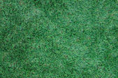 Green grass for background — Stock Photo
