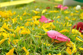 Rose and flower petal on green grasses  — Stock Photo