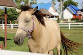 Horse in farm — Stock Photo