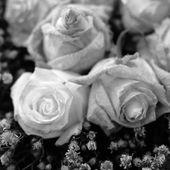 Suche róże kwiaty — Zdjęcie stockowe