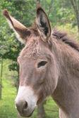 Donkey over white — Foto de Stock