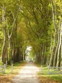 Avenue of Trees — Fotografia Stock