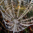 Stock Photo: Frozen Cobweb
