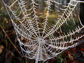 Frozen Cobweb — Stock Photo
