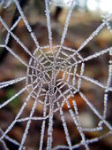 Frozen Cobweb — Stock Photo