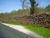 Log pile at the roadside — Stock Photo