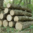 Log pile in the woods - Stock Photo