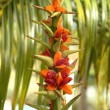 Kahili Ginger Plant - Stock Photo