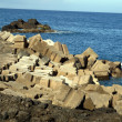 Sea Defences — Stock Photo