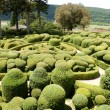 Stock Photo: French Topiary Garden