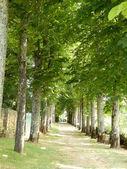 Avenue of Trees — Stock Photo