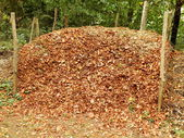 Compost Heap — Stock Photo