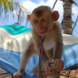 Stock Photo: Little Monkey