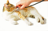 Cat veterinarian examination — Stock Photo