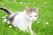 Cat on the grass — Stock Photo