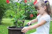 Girl planting flowers — Stock Photo