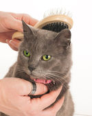 Cat care — Stock Photo