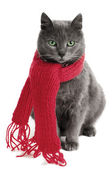 Cat with a Scarf — Stock Photo