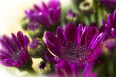 Purple flowers — Photo