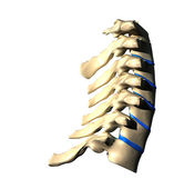Cervical Spine - Lateral view - Side view — Stock Photo