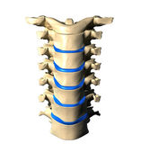 Cervical Spine - Anterior Front view — Stock Photo