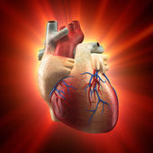 Real Heart Shinning in Light - Human Anatomy model — Stock Photo