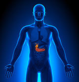 Medical Imaging - Male Organs - Gallbladder Pancreas — Foto Stock