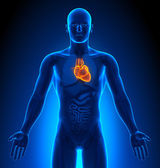 Medical Imaging - Male Organs - Heart — Stock Photo