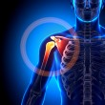 Shoulder Scapula Clavicle - Anatomy Bones — Stock Photo