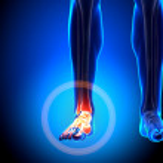Постер, плакат: Tarsals Phalanges Ankle bones Anatomy Bones