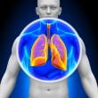 Stock Photo: Medical X-Ray Sc- Lungs