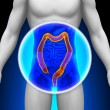 ������, ������: Medical X Ray Scan Colon