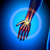 Palm anatomia - ossos anatomia — Foto Stock