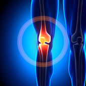 Knee - Anatomy Bones — Stock Photo