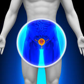 Medical X-Ray Scan - Bladder — Stock Photo