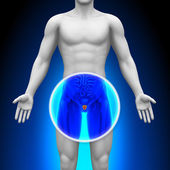 Medical X-Ray Scan - Prostate — Stock Photo