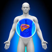 Medical X-ray Scan - Liver — Stock Photo