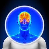 Medical X-Ray Scan - Brain — Stock Photo