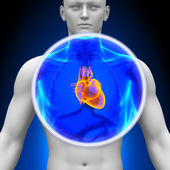 Medical X-Ray Scan - Heart — Stock Photo