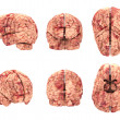 Stock Photo: Anatomy Brain - 6 Views Isolated on White