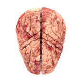 Anatomy Brain - Top View Isolated on White — Stock Photo