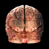 Anatomy Brain - Front View on Black Background — Stock Photo